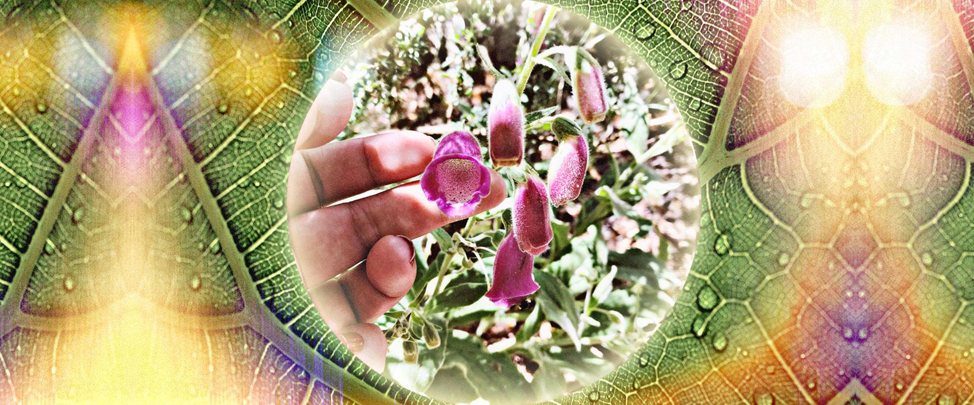 medicina vibracional Universo AmmA